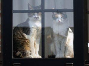 後ろの百太郎猫