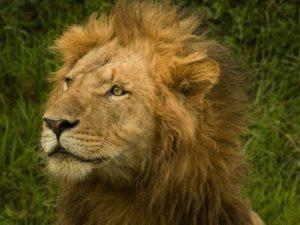 ライオンズゲートが開く日