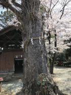 鏡作坐天照御魂神社にチャネラー裕子さんと行ってきました。ありえない幸運に恵まれました。ここでは言えないけど。
