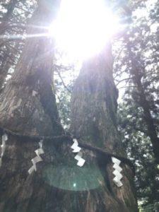 玉置神社夫婦杉